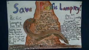 pacific lamprey